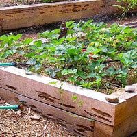 garden materials. Pecky Cedar Garden Materials T