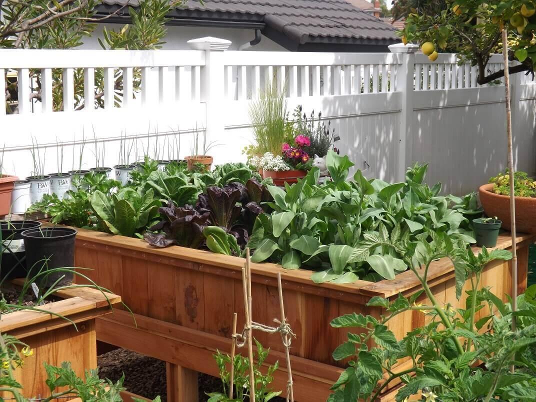 Benefits-of-Garden-Boxes-Blog