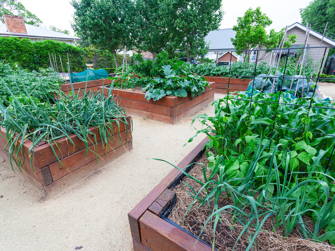Gardening on Your Terms: Garden Anywhere with Garden Box Kits