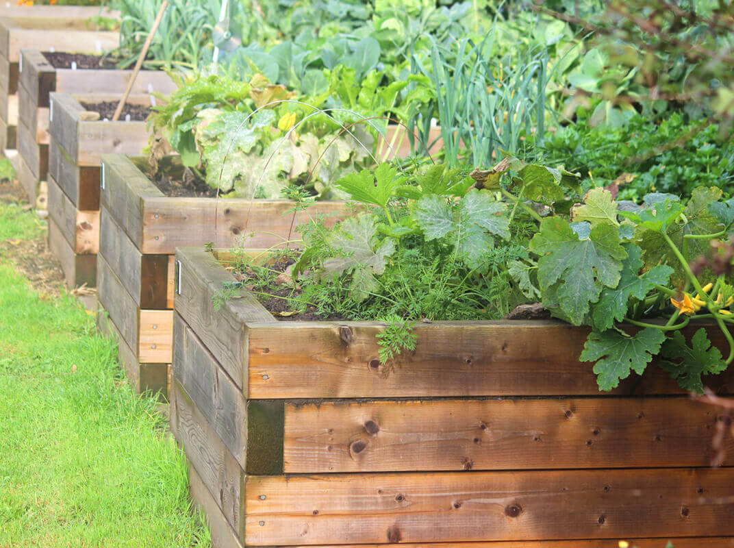Raise It Up: When to Consider a Raised Garden Bed